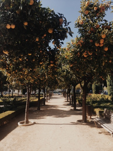 orange trees everywhere!